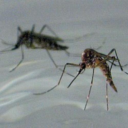 MP vai acompanhar ações de combate ao mosquito em Fronteiras e Alegrete