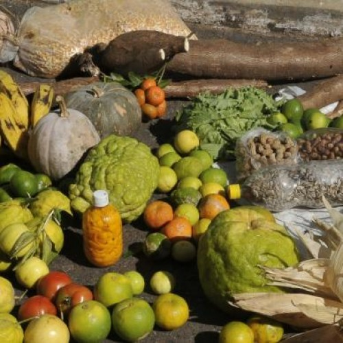 Dilma: governo destina R$ 21 bilhões para financiar a agricultura familiar