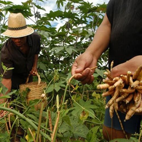 Garantia-Safra chegará a mais de 6,6 mil agricultores