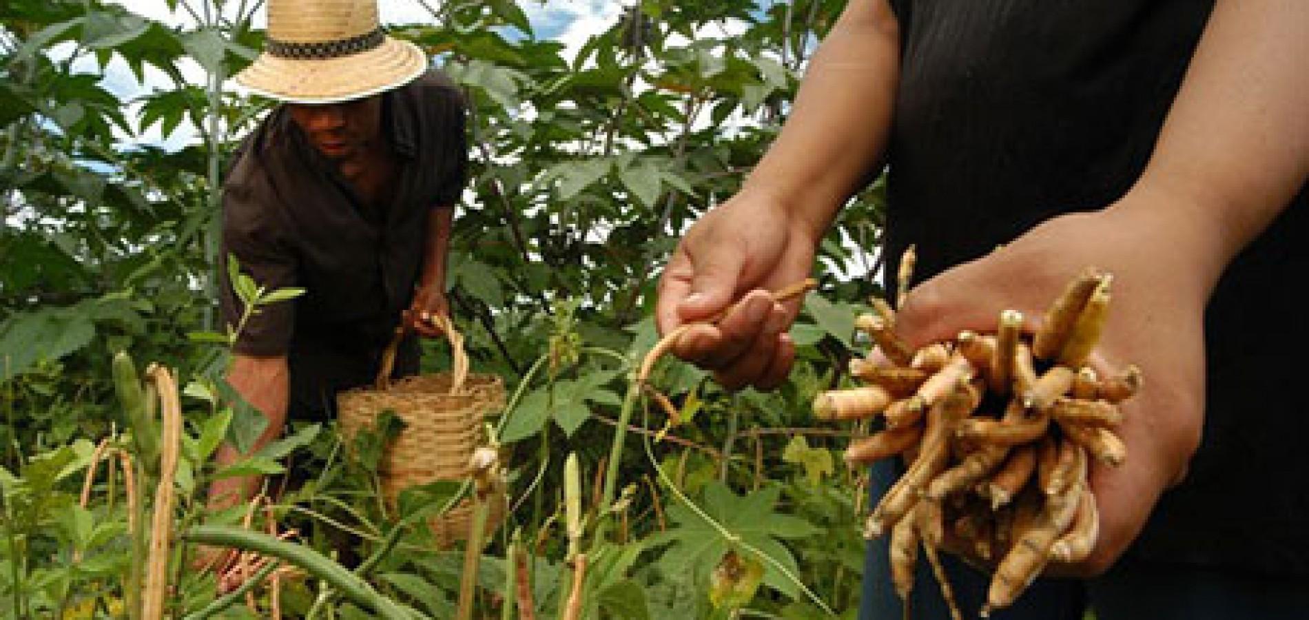 Agricultores familiares terão seguro safra prorrogado por dois meses
