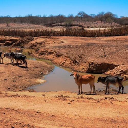 Piauí vive o 5º ano consecutivo de seca e 250 carros-pipa atuarão no Estado