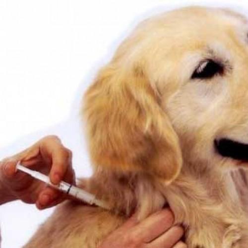 FRANCISCO MACEDO | Secretaria de Saúde está realizando campanha de vacinação anti-rábica