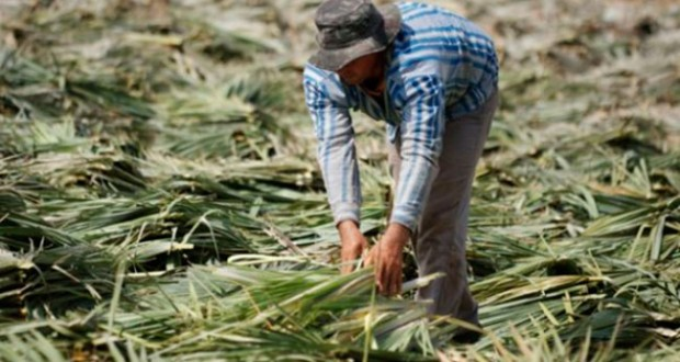Picos está em 3º lugar no ranking nacional de trabalho escravo
