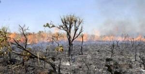 Piauí ocupa 7º lugar no ranking nacional de queimadas