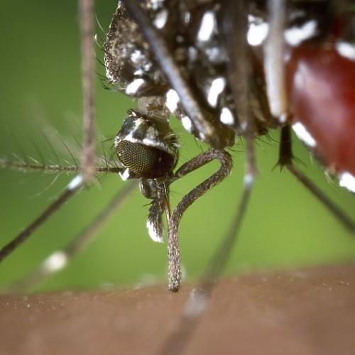 Agricultor do interior de Itanópolis pode ser primeiro humano com febre do Nilo no Brasil