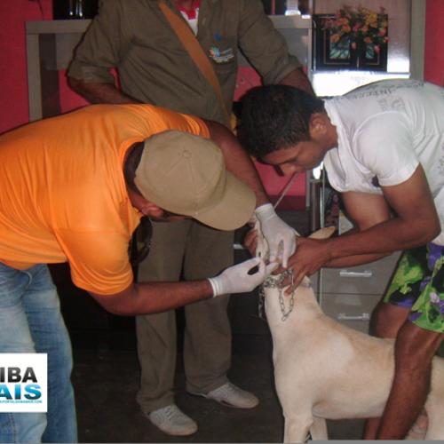 JAICÓS |  Vigilância sanitária realiza campanha de combate a leishmaniose