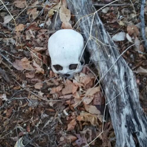 PICOS | Polícia encontra cadáver humano em terreno baldio; fotos