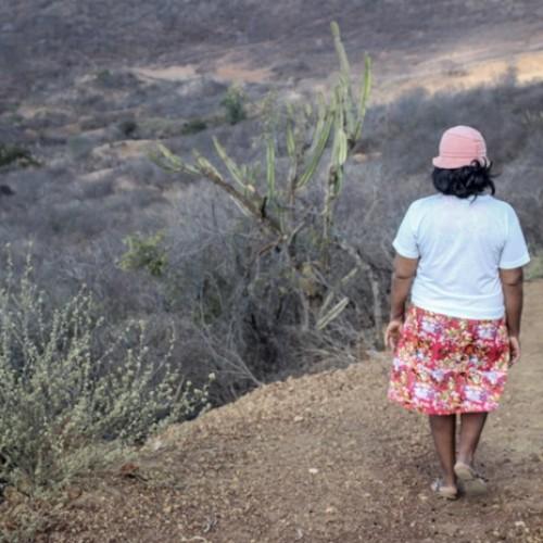 'Se comprar água, vai faltar comida para os meninos', diz agricultor no PI