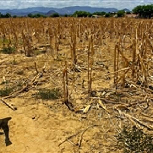 Seca afeta 150 mil famílias na região do semiárido piauiense