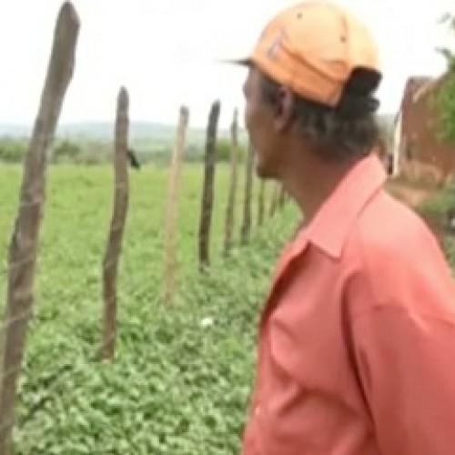Após 3 anos de seca, agricultores de Picos comemoram período chuvoso