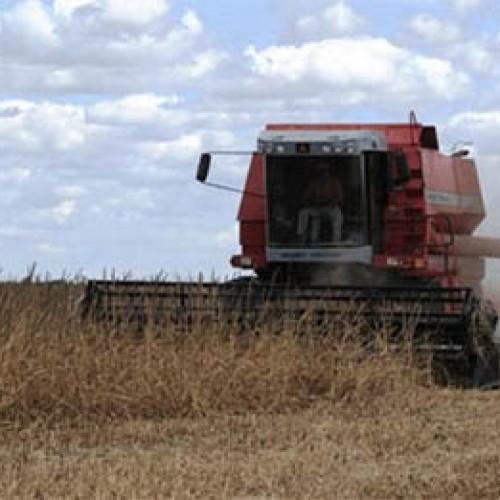 Fetag: 15 cidades do Piauí não têm chuvas há um mês e agricultores perdem safra