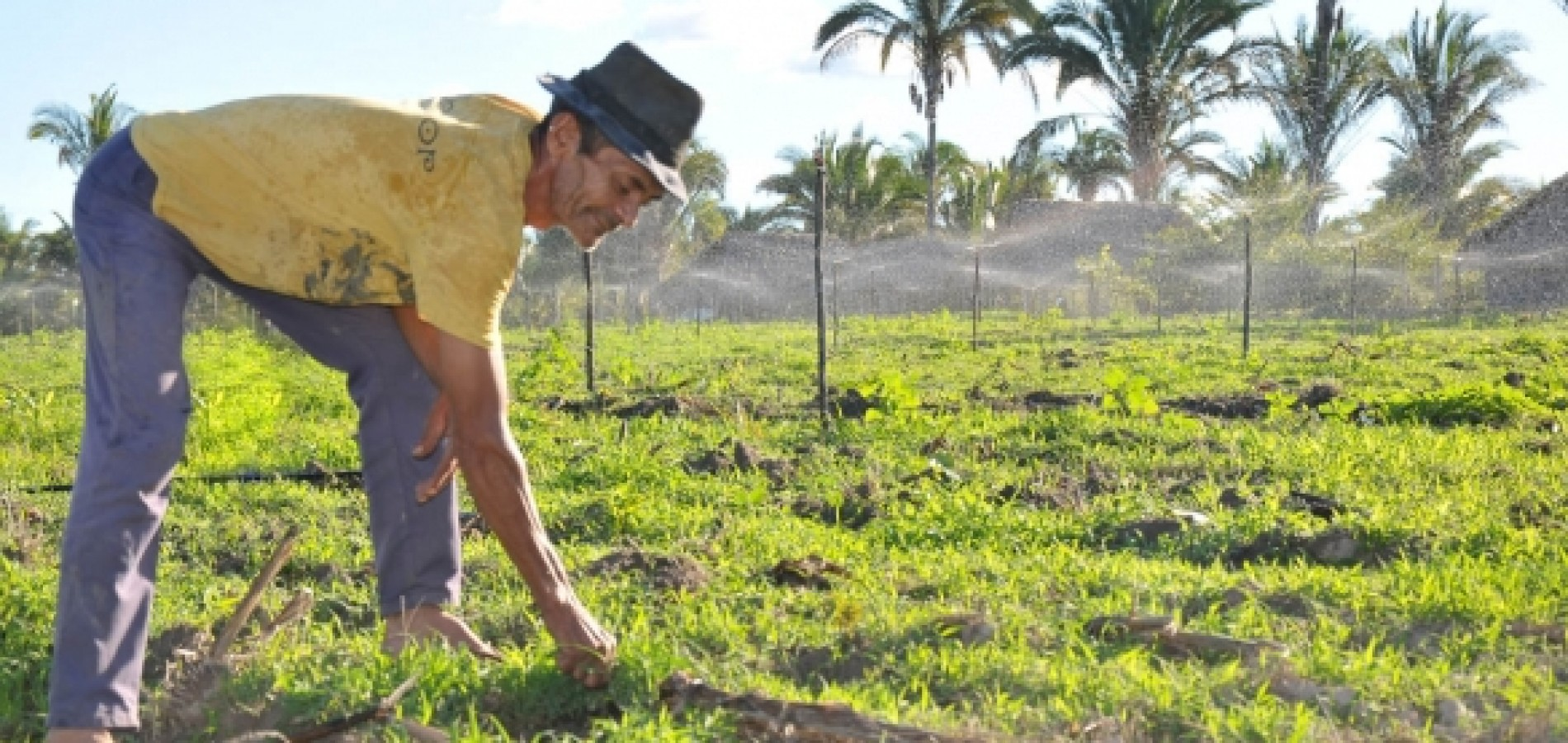 Agricultores tem desconto de 80% em negociação de dívidas