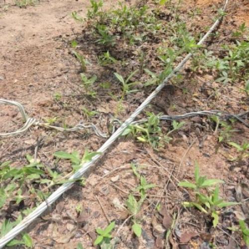 Mulher de Patos morre eletrocutada na zona rural do município de Altos. Veja!