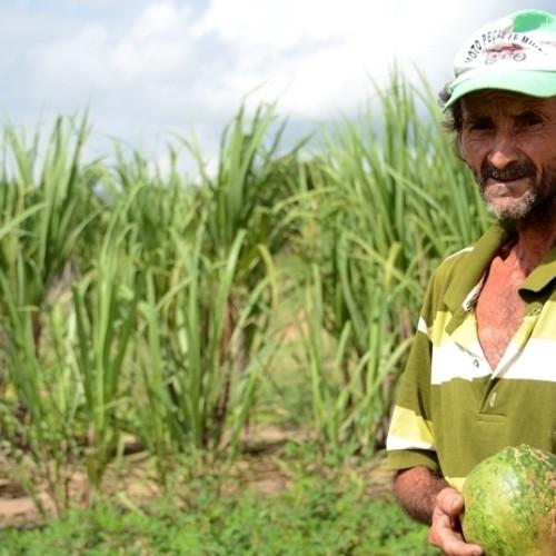 Em Jaicós, agricultura familiar sobrevive graças a barragens subterrâneas