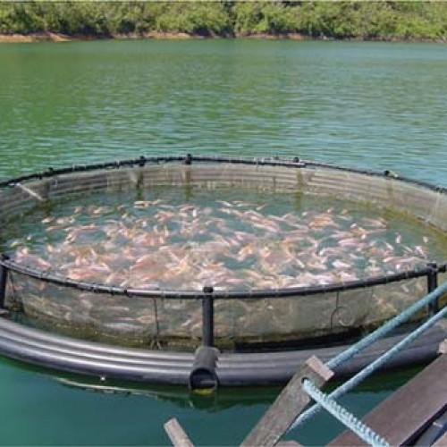 Projeto de fortalecimento da piscicultura distribuiu 200 mil alevinos em 80 dias em municípios Piauienses