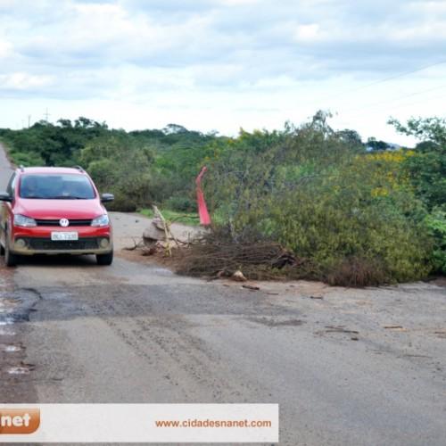 Descaso! Cratera aumenta na PI 243 e parte da rodovia é interditada por árvores; veja fotos