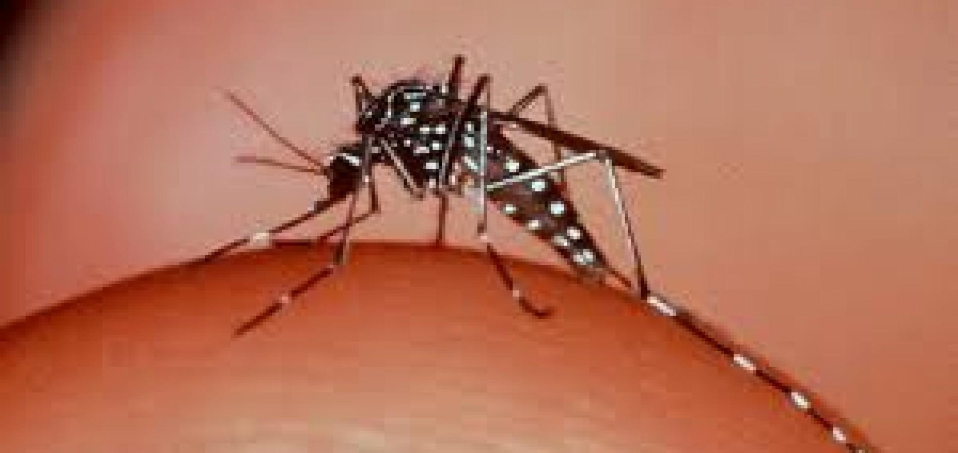 Piauí tem 1.854 casos de dengue em 69 municípios do Piauí