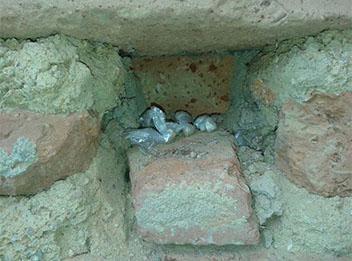 Polícia encontra droga em fundo falso de parede no Piauí