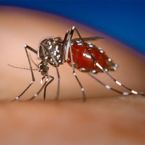 Piauí detecta casos de dengue em 102 municípios. Seis cidades estão em sinal de alarme