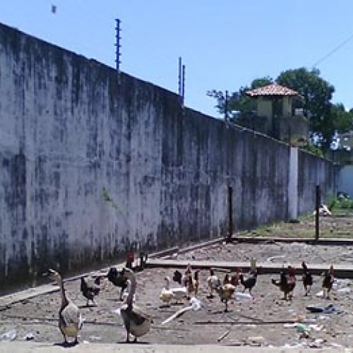 Presídio do Piauí usa gansos para alertar fuga de detentos