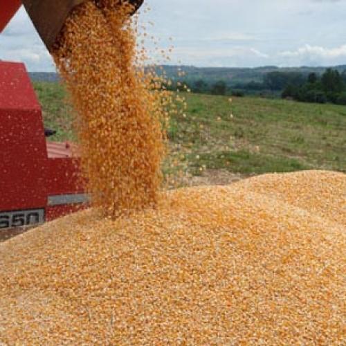 Piauí teve 5º maior aumento na produção agrícola entre os estados brasileiros