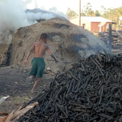 Piauí possui mais de 108 mil crianças trabalhando, diz IBGE