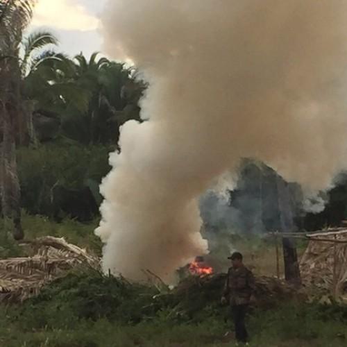 Parte das 16 toneladas de maconha encontrada em fazenda é incinerada