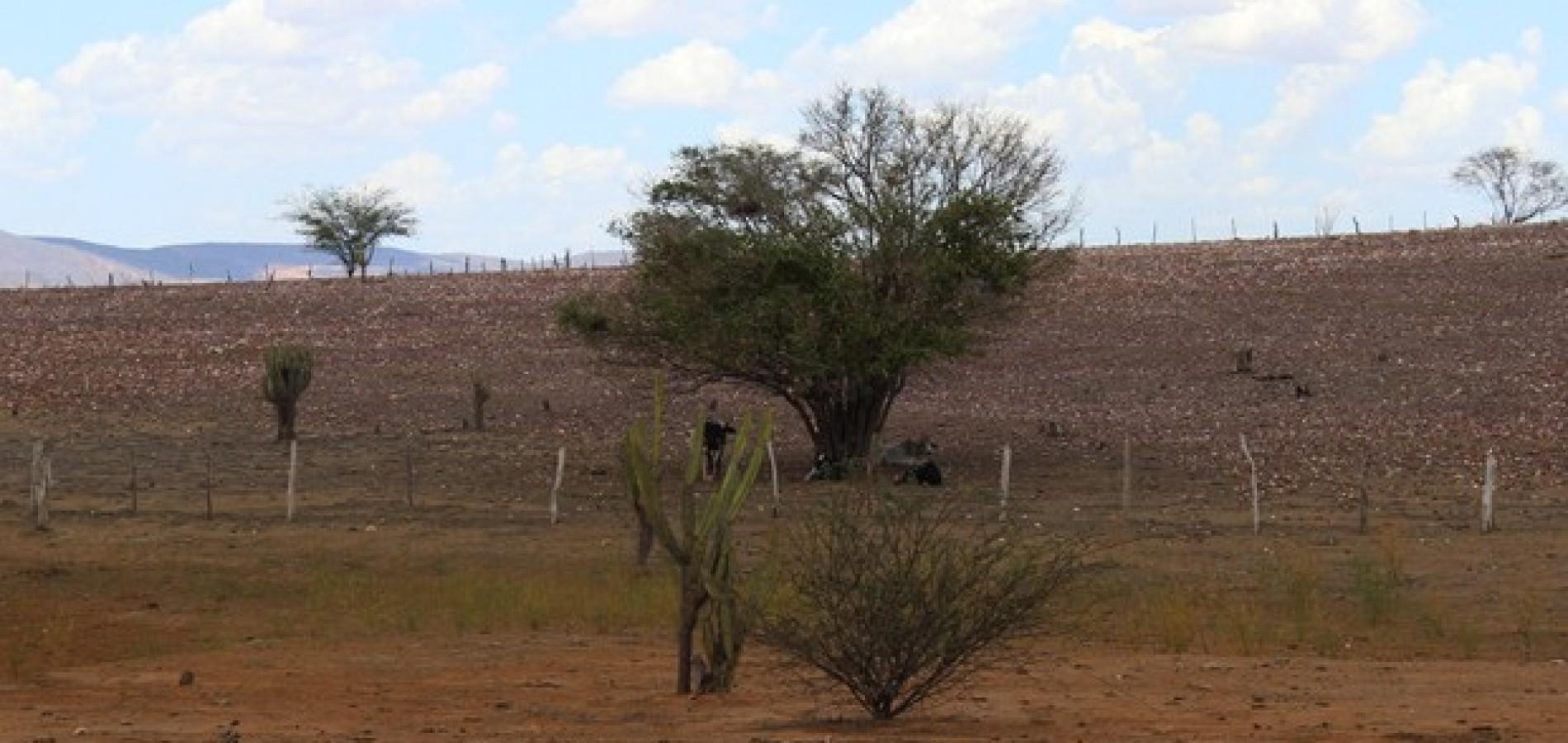 Governo Federal reconhece estado de emergência em 152 cidades do Piauí; veja quais!