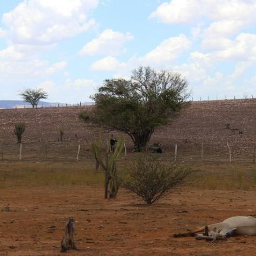 Nordeste: seca de cinco anos está perto do fim