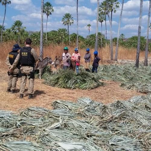 Operação resgata 29 trabalhadores em condições degradantes no Piauí