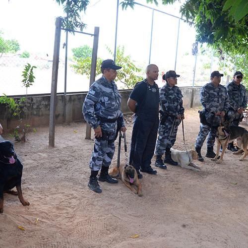 Conhecidos pela fidelidade, cães ajudam a combater o crime no Piauí