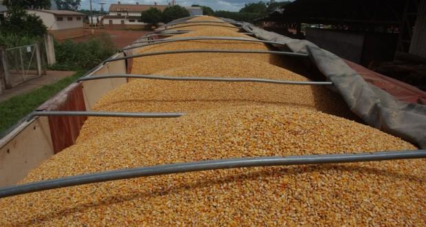 Exportação de milho no Piauí sai de zero para US$ 3,113 milhões em 2015