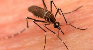 dengue22