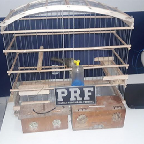 PRF recupera animais silvestres e veículo roubado no Sul do Piauí