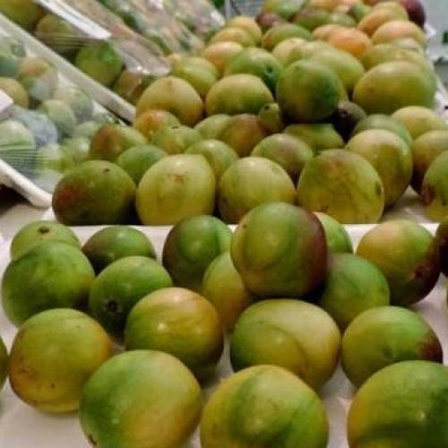 Fruto medicinal, umbu oferece muito mais do que sabor