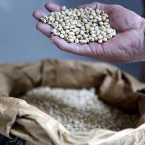 SDR entrega sementes em mais  quatro cidades do Piauí