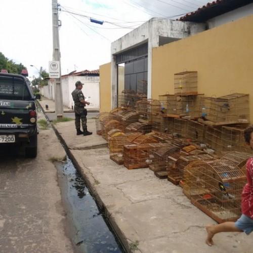 Homem é detido com 76 aves silvestres e leva multa de R$ 26 mil