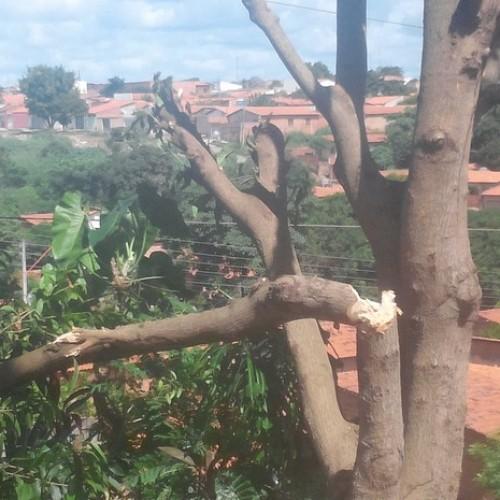 Três cidades do Piauí ficam sem energia por causa de corte irregular de árvore