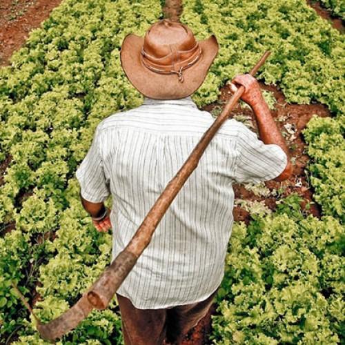 Senado aprova auxílio financeiro para agricultores familiares; R$ 600 reais em 5 parcelas
