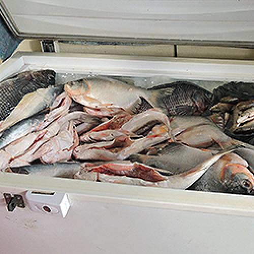 Vigilância alerta para precauções na hora de comprar peixe da quaresma