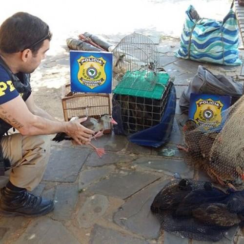 PRF prende homem com 18 animais silvestres no litoral no Piauí