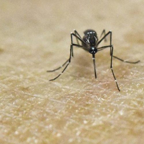 Piauí notifica 2.169 casos de chikungunya e 184 de microcefalia