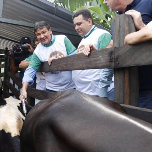Campanha de Vacinação contra a Febre Aftosa é lançada no Piauí