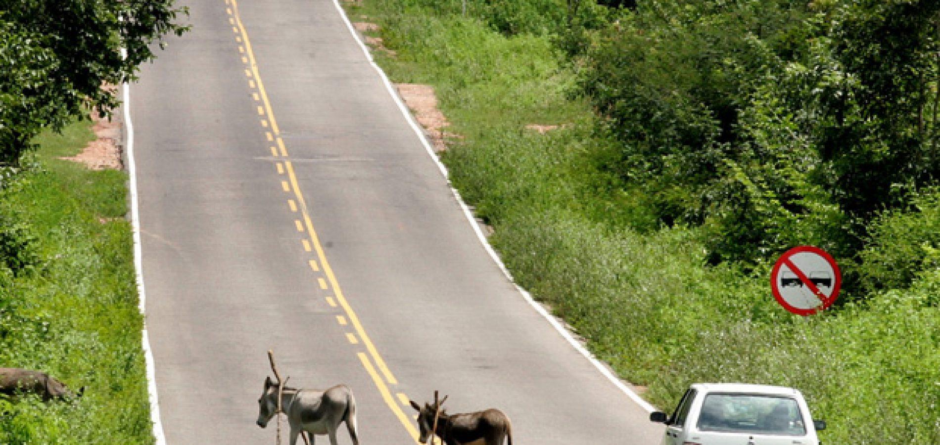 Cresce 30% número de animais apreendidos em rodovias do Piauí