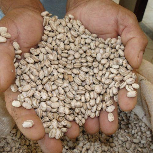 Vilão da cesta básica, feijão é vendido no interior do Piauí por R$ 2 o quilo