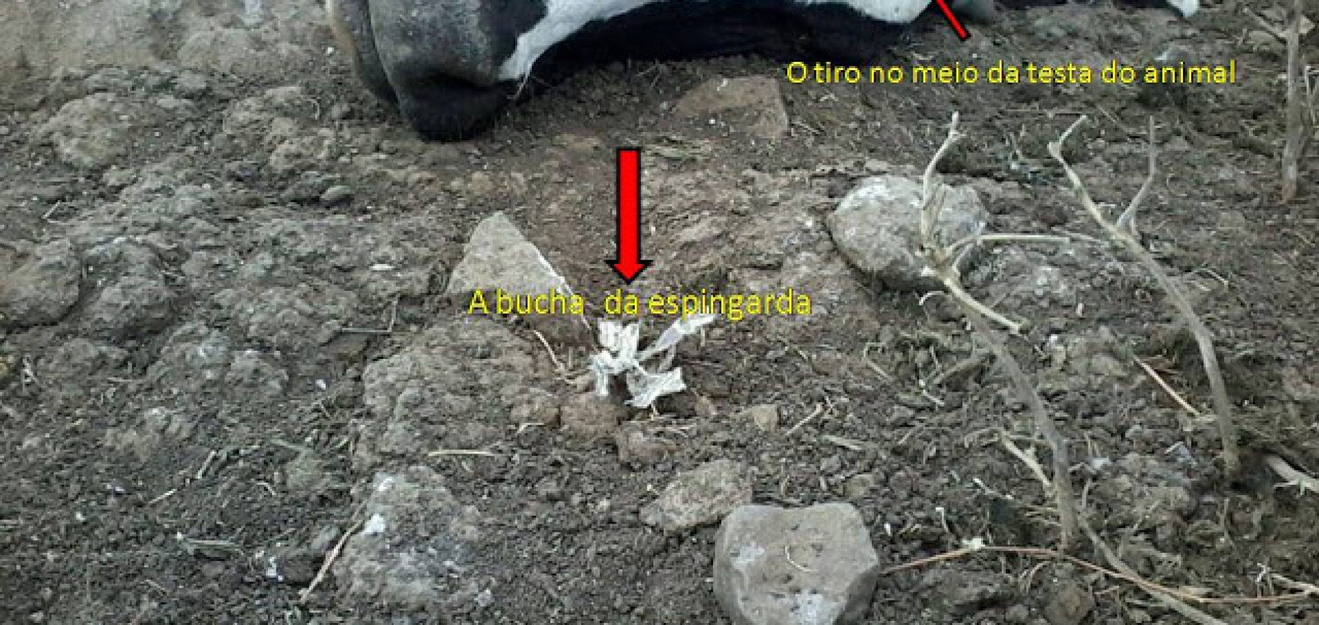 Criador denuncia furtos e mortes de animais com tiros de arma de fogo no interior do Piauí