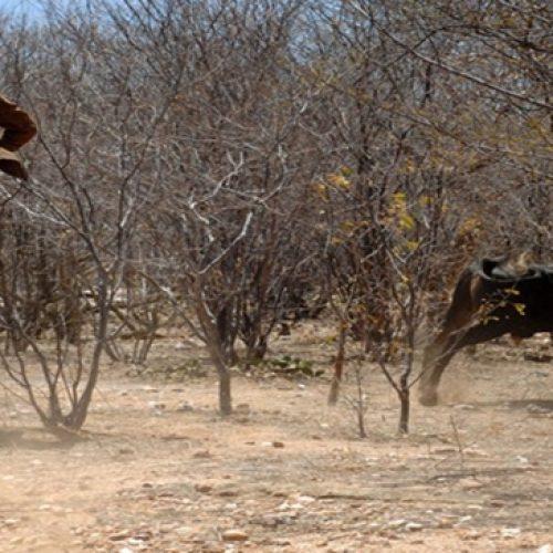 TRT determina indenização de R$ 368 mil a vaqueiro acidentado em Picos