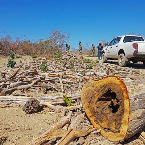 Empresa da Noruega estaria incentivando desmatamentos  na região de São Raimundo Nonato