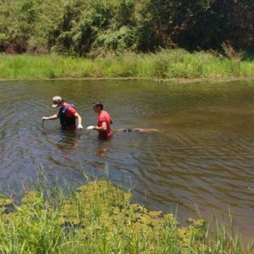 ITAINÓPOLIS   Corpo é encontrado boiando no Rio Itaim