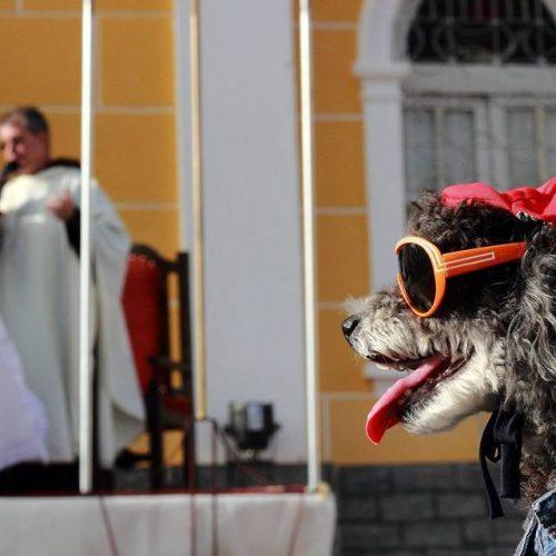 Dia de São Francisco de Assis tem bênção dos animais no Litoral do Piauí